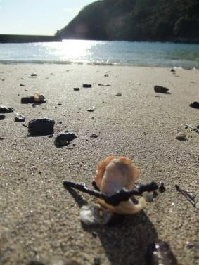 今日は貝殻がいっぱい