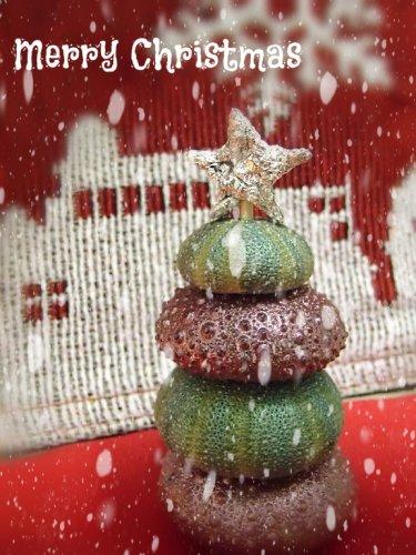 ウニ殻で作ったクリスマスツリー